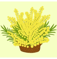 Mimosa flowers in the basket vector image