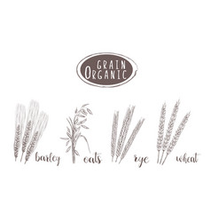 organic grain sketch hand drawing vector image