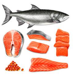 realistic salmon set vector image