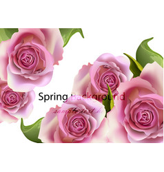 spring card roses background realistic vector image