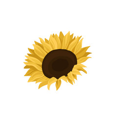 Sunflower source of edible oil vector