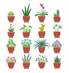 browallia clivia collection vector image