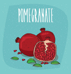 isolated ripe pomegranate fruits with leaves vector image