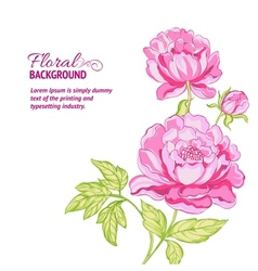 Pink peonies background with sample text vector image
