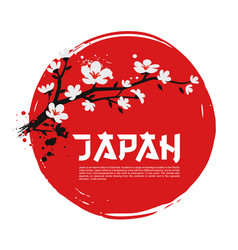 sakura on red background vector image
