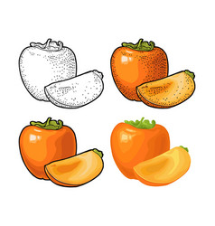 Whole and half persimmon engraving and vector