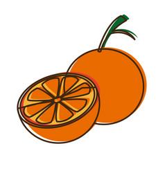 citrus orange fruit vitamins nutrition health food vector image