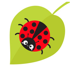 Cute cartoon lady bug sitting on green leaf cute vector