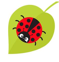 Cute cartoon lady bug sitting on green leaf vector