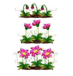 Growth stage fancy pink flower vector