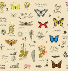seamless pattern with insects and medicinal vector image