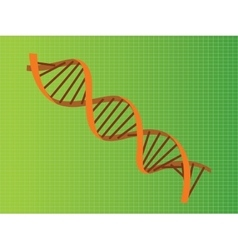 dna strand orange vector image