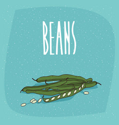 isolated ripe vegetable pod fruits of pea or beans vector image