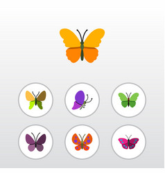 Flat monarch set of summer insect violet wing vector