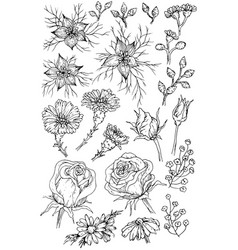 collection hand drawn flowers and plants black vector image