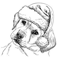 Labrador Retriever 07 vector image