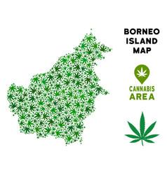 Marijuana collage borneo island map vector