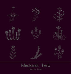 Medicinal herbs icons set vector