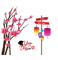 Sakura flowers background cherry blossom and vector