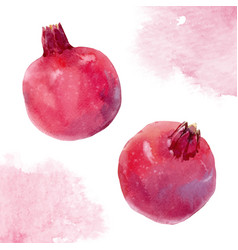 Watercolor pomegranate vector