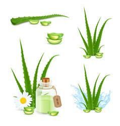 Aloe vera icons vector
