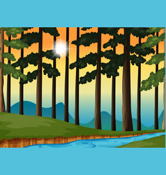 Forest scene at sunset vector