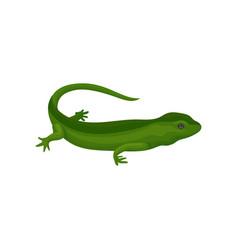 Gecko amphibian creature on a vector