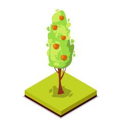 green apple tree isometric 3d icon vector image