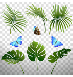 set branches tropical plants and butterflies vector image