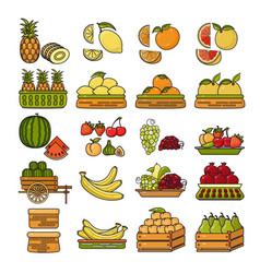 set of flat design cute colorful fruit icon vector image vector image