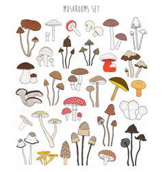 collection of hand drawn colorful mushrooms set vector image vector image