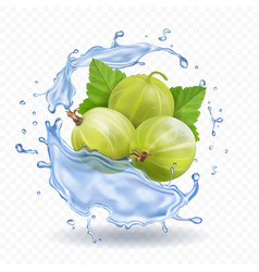 gooseberry fruit in water splash with leaves vector image