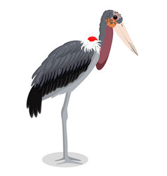 Marabou stork cartoon bird vector