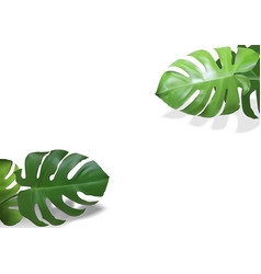 Monstera leaves plant background vector