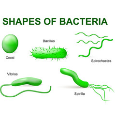 bacteria tip2 vector image vector image