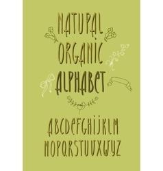 decorative alphabet and floral elements vector image