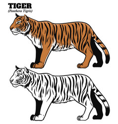 hand drawing style of tiger vector image vector image