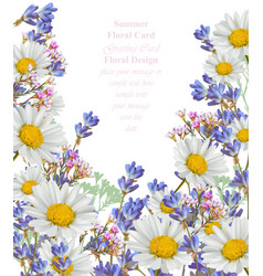 Chamomile and lavender summer card vector