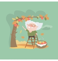 Grandfather collects the harvest of apples vector image