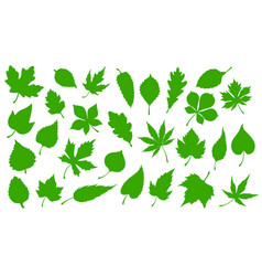 green leaves nature tree leaf icons vector image