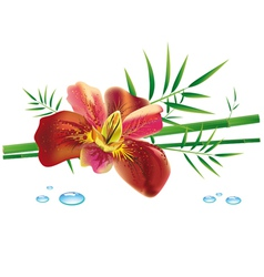 Iris flower and bamboo vector