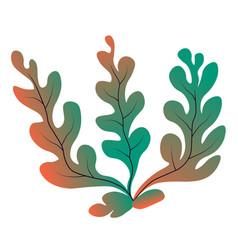 Marine botany and seaweed decor for aquarium vector