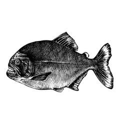 Piranha pygocentrus nattereri fish collection vector