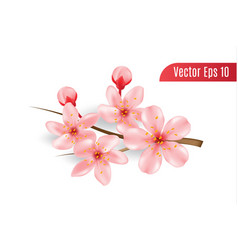 realistic 3d cherry blossom on isolated vector image