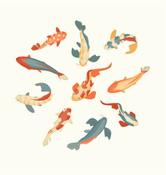 color koi fish set on a white background vector image