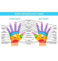 Hand Reflexology Chart vector