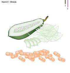 Unripe Papaya with Vitamin C and Minerals vector