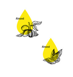 Almond oil icon set hand drawn sketch extract vector
