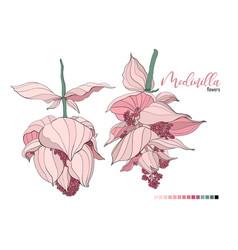 floral bouquet design garden pink peach vector image