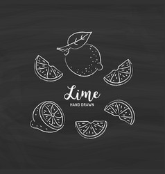 lime fruit drawing half and slice lemon vector image